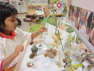 Pavi seed science (1)